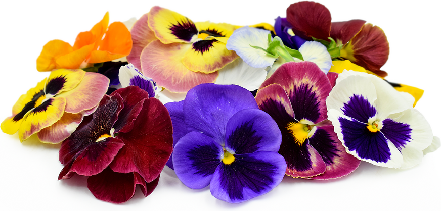 Pansy Flowers picture