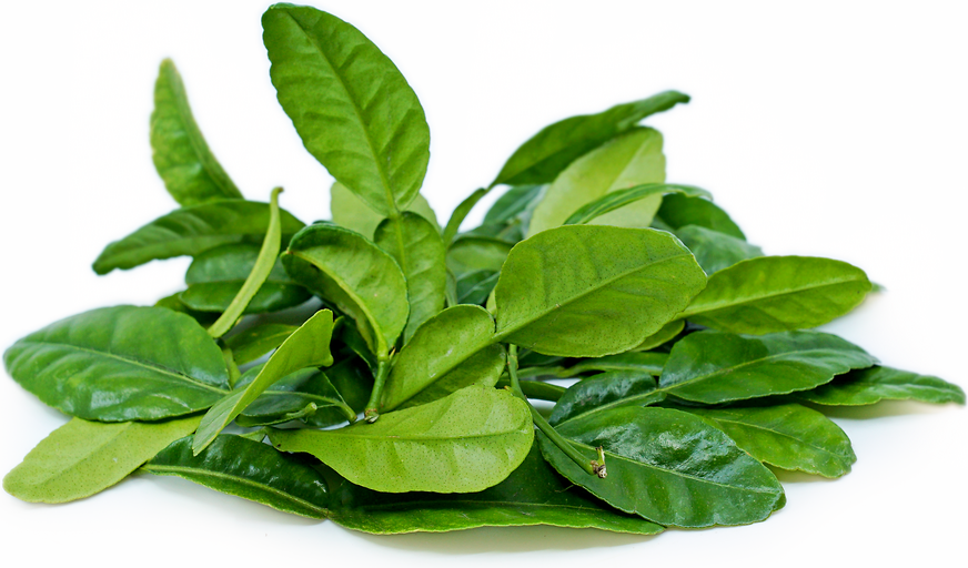 Kaffir Lime Leaves picture