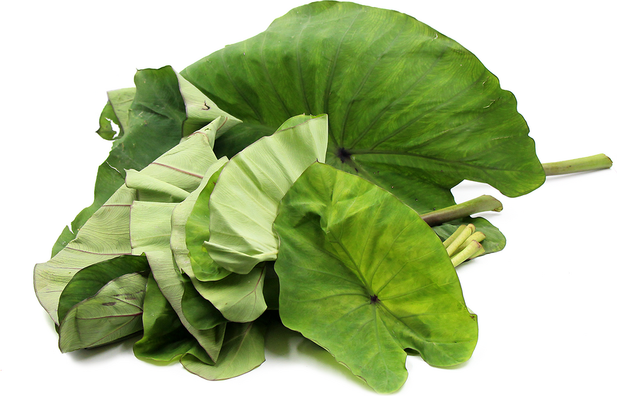 Taro Leaves picture