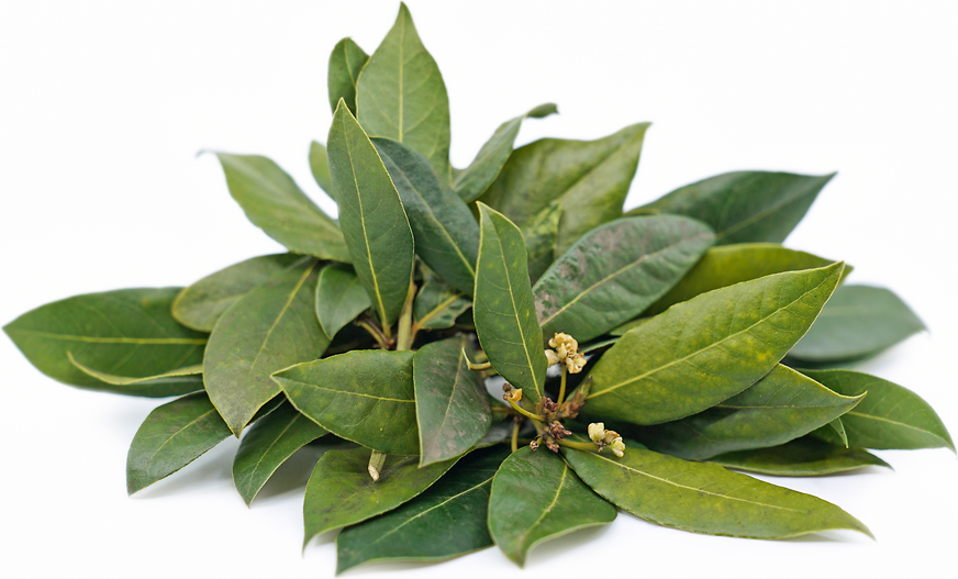 Bay Leaves picture