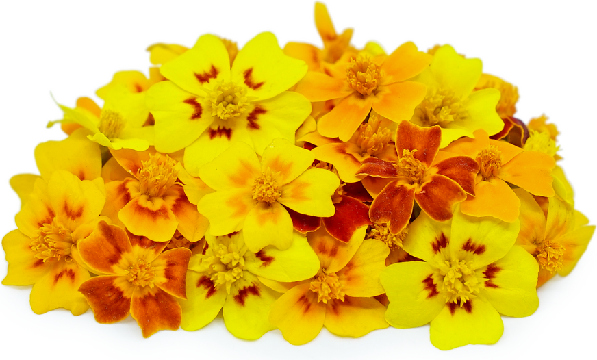Marigold  MicroFlowers™ picture