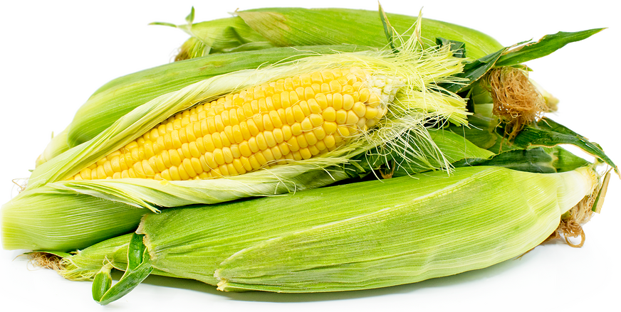 Yellow Corn picture