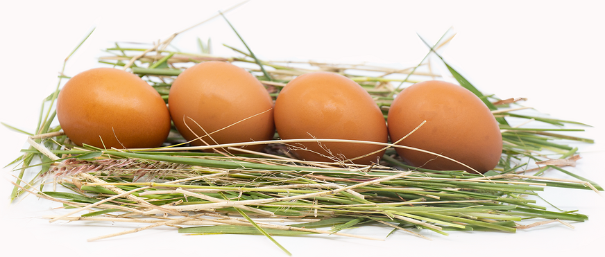 Brown Chicken Eggs picture
