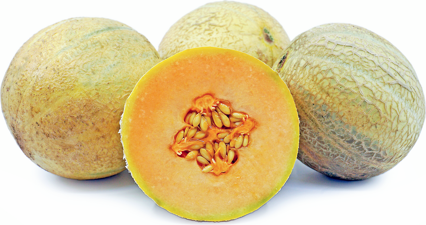 Cavaillon Melon picture