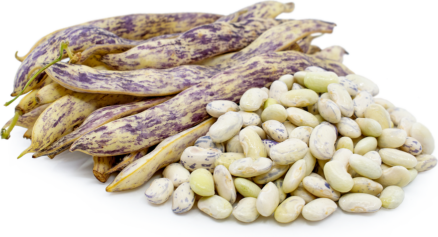 Dragon Tongue Shelling Beans picture