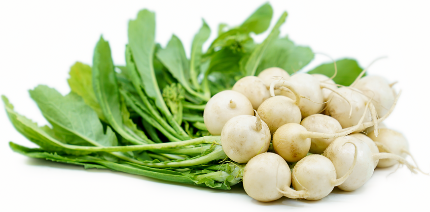 Japanese Turnips picture