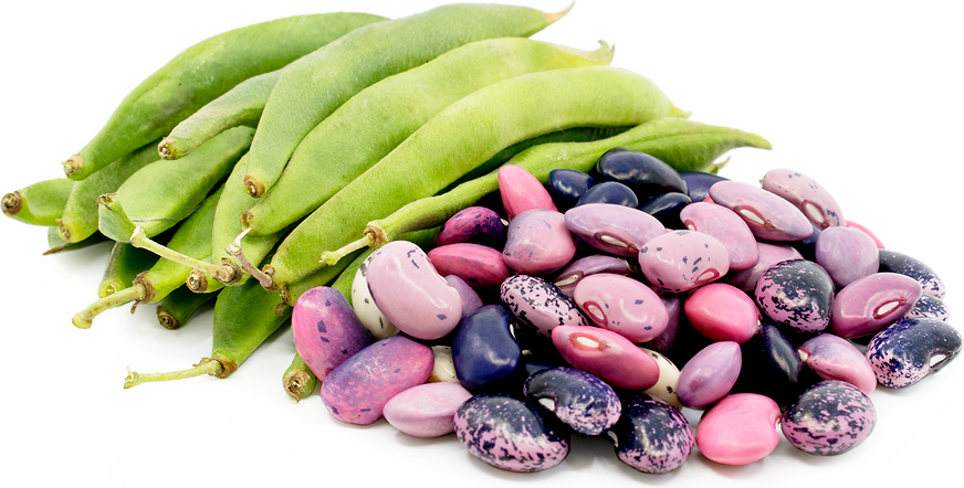 Scarlet Runner Shelling Beans picture