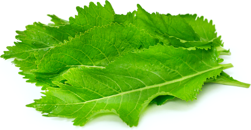 Horseradish Leaves picture