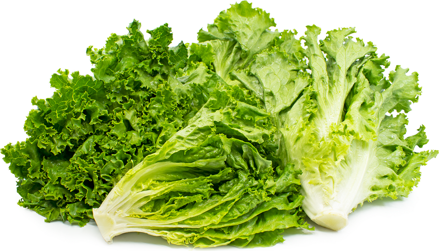 Green Leaf Lettuce picture