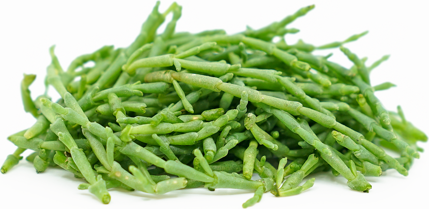 Micro Sea Beans™ picture