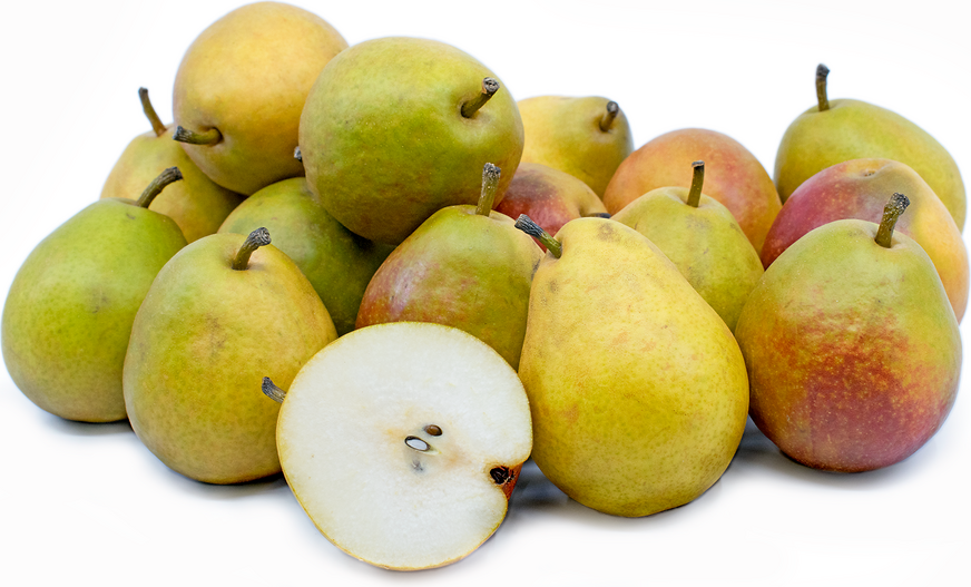 Seckel Pears picture