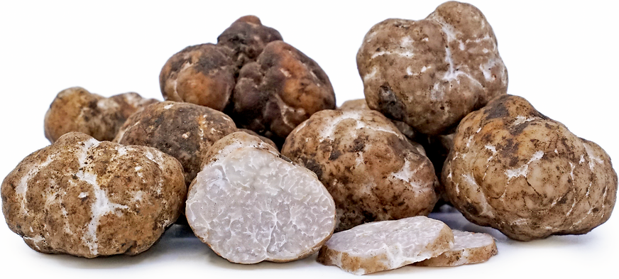 White Oregon Truffles