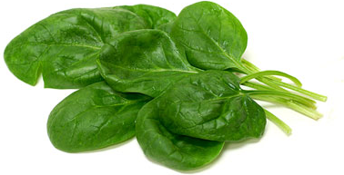 Giant Noble Spinach picture