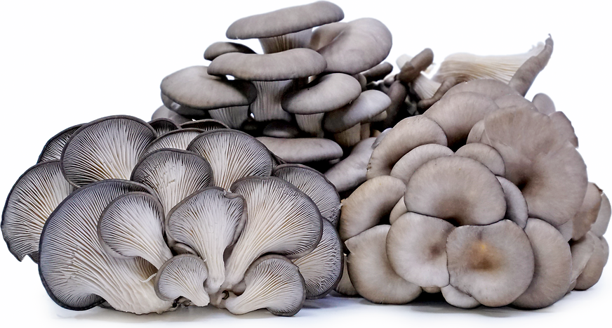 Oyster Mushrooms picture
