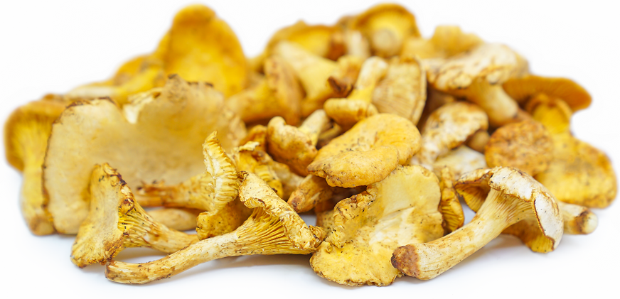 Chanterelle Mushrooms picture