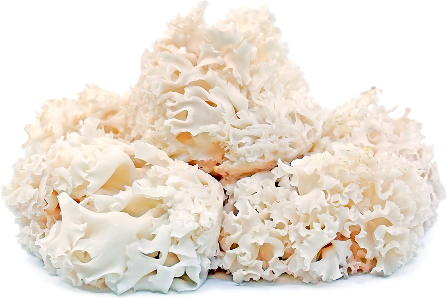 Cauliflower Mushrooms picture