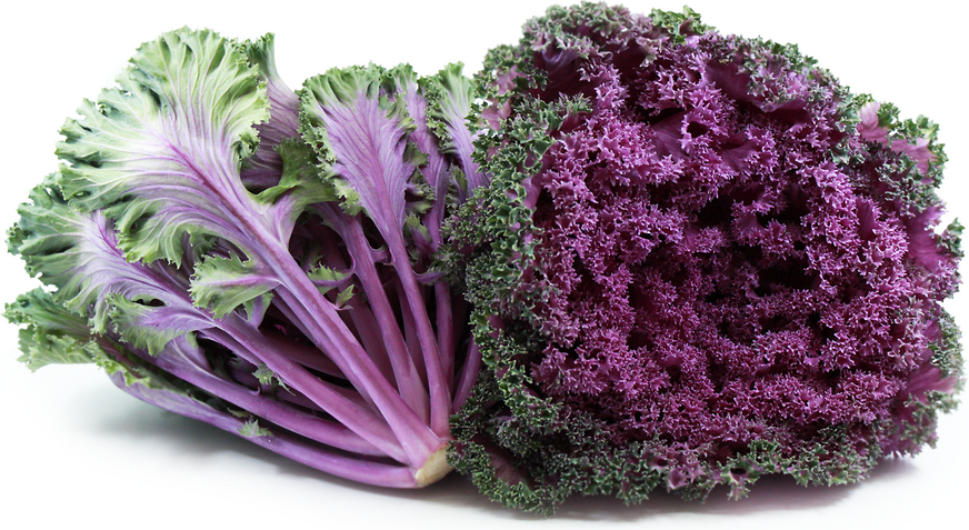 Kale Purple picture