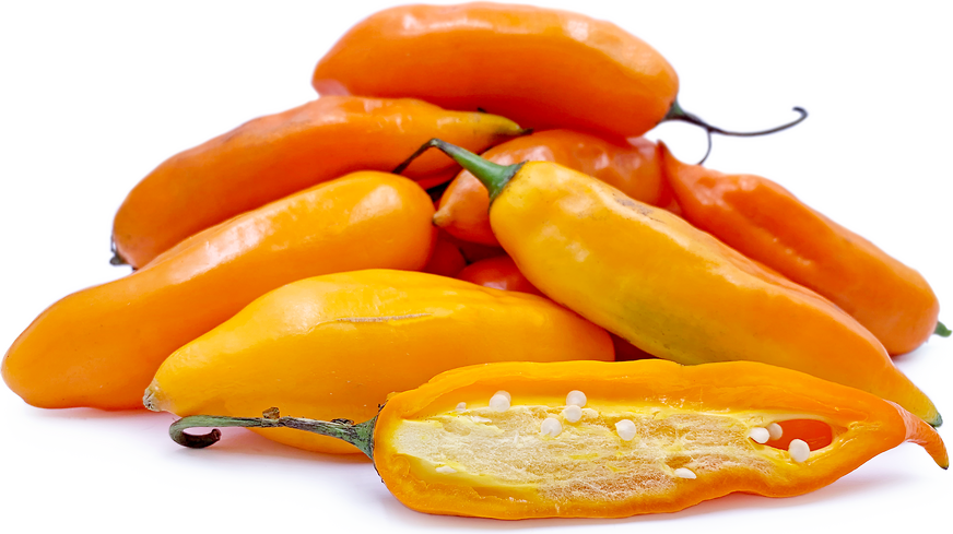 Aji Amarillo Chile Pepper