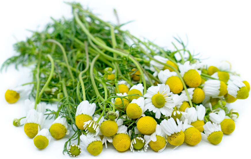 Fresh Chamomile picture