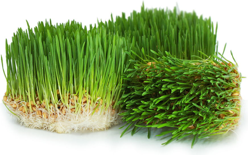Organic Wheat Grass picture