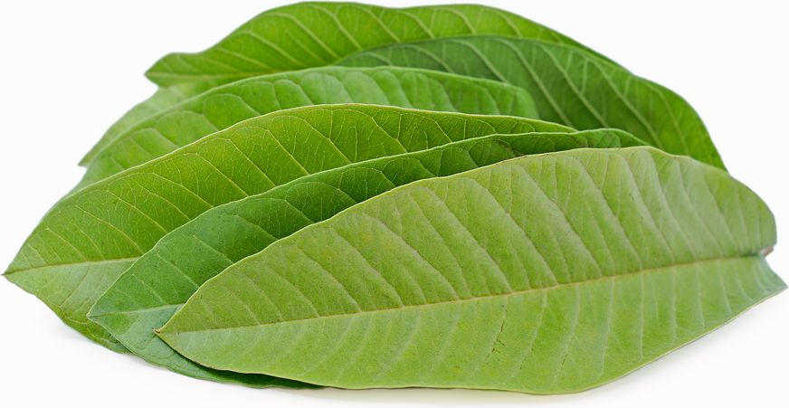 Guava Leaves picture