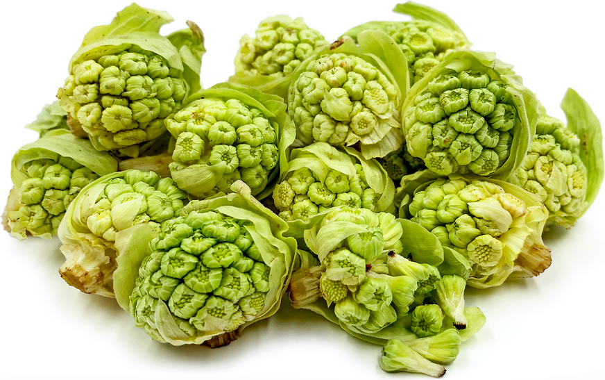 Butterbur Sprout picture