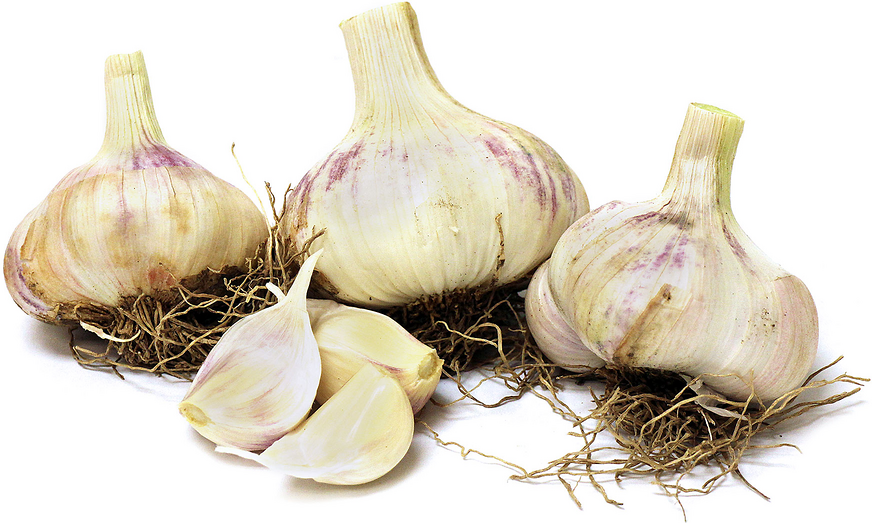 Red Toch Garlic