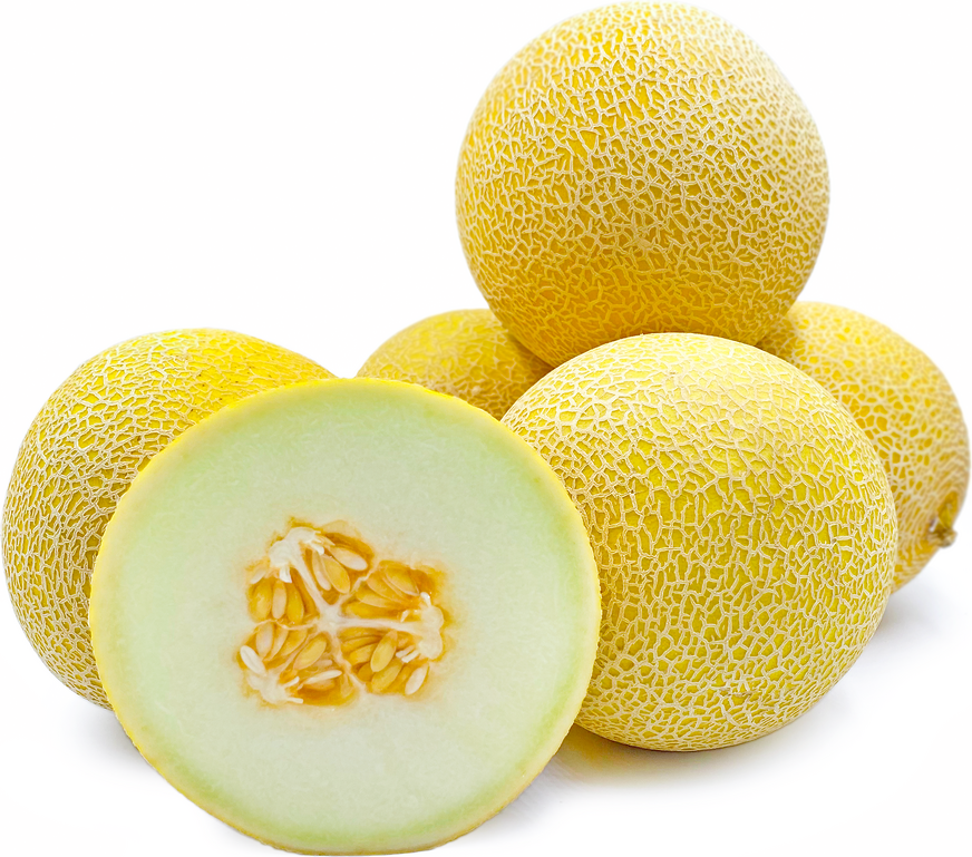 Galia Melon picture