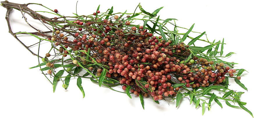 Pink Peppercorns picture