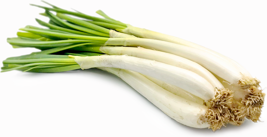 Calcot Onions picture
